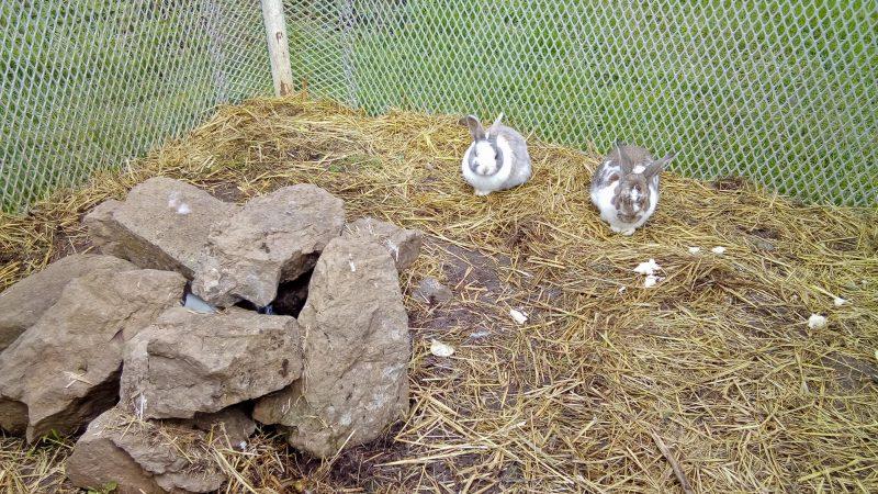 But du jeu: trouver le 3ème lapin