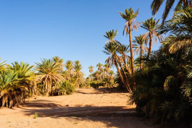 Non Némo, on va pas slalomer au milieu des palmiers!